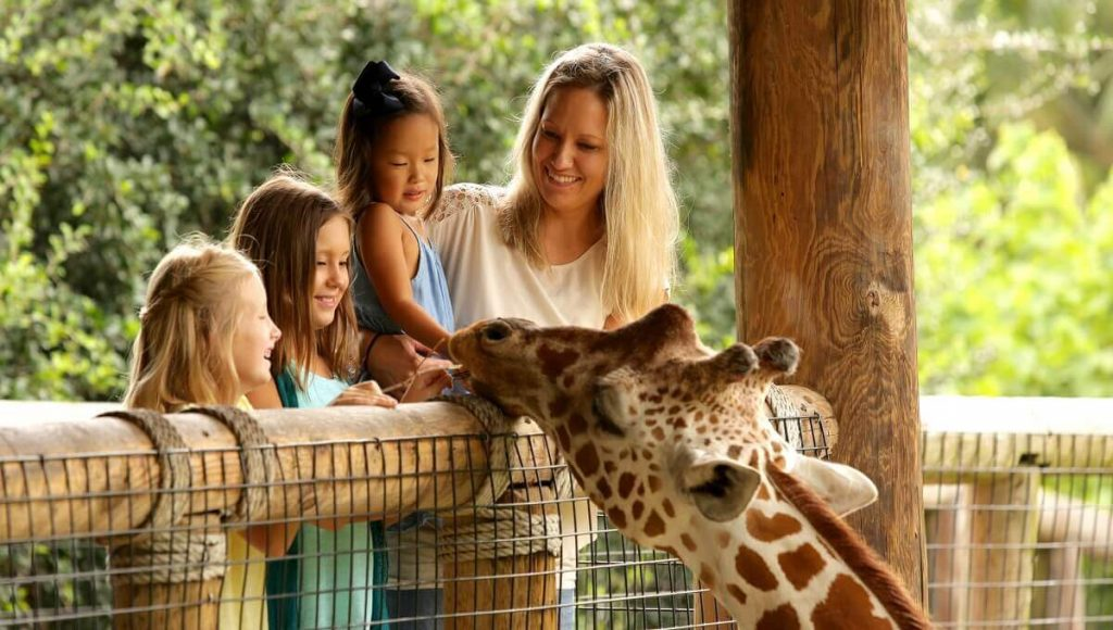 Fun Activities with kids Zoo